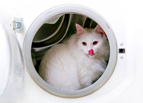 Laundry Service I
