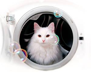 Laundry Service II