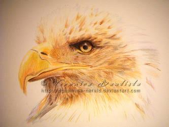 Eagle by Dynamene-Nereid