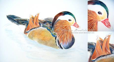 Mandarin Duck by Dynamene-Nereid