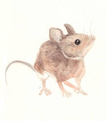 Mouse by fossick