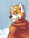 Tavi in the Snow