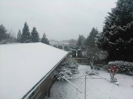 Snowy. :3