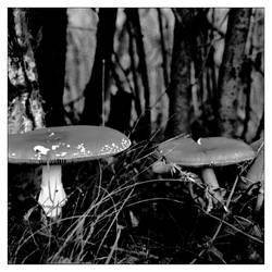 'Fungus among us'