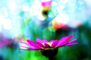 Violet Dreams by fairytale-ending