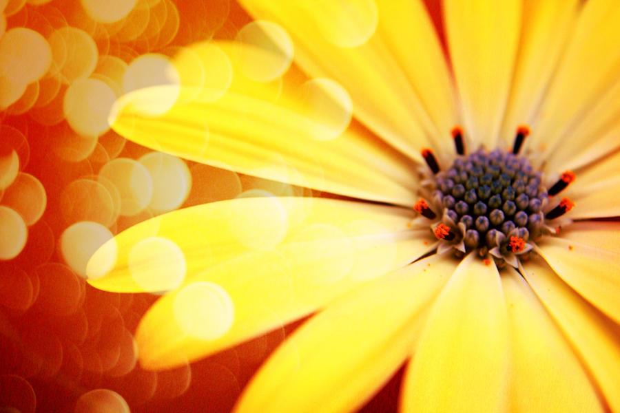 Sunshine by fairytale-ending