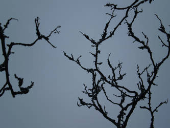 Black branches by Luna2-stock