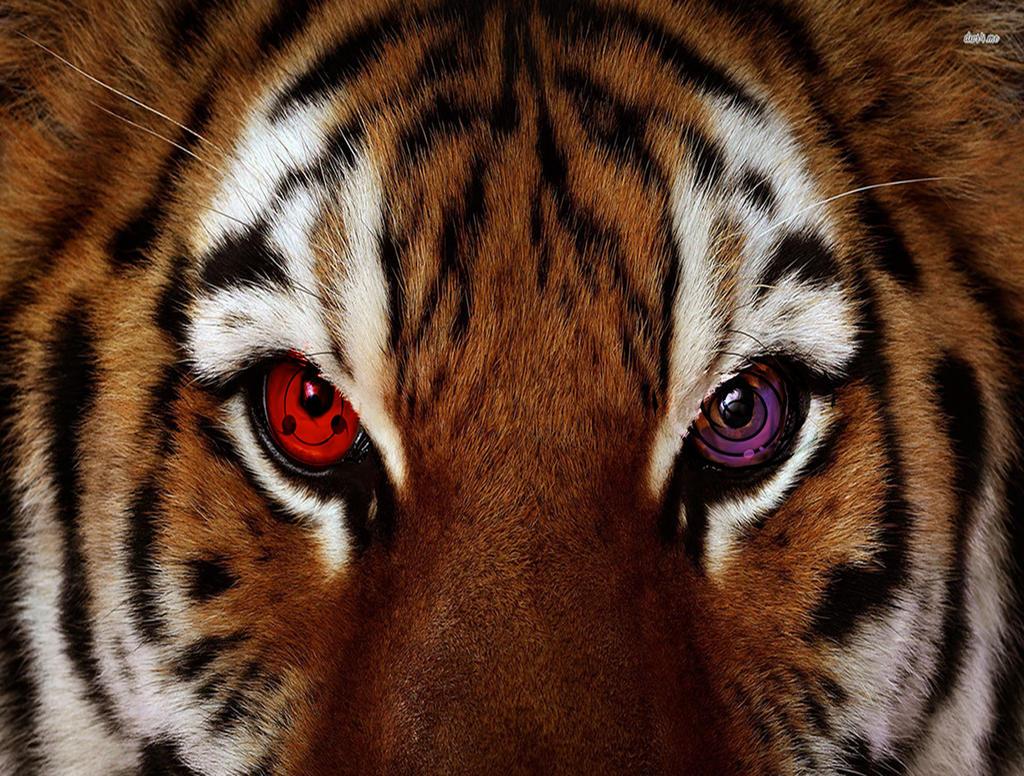 helm tigers eye repeat - HD1024×776