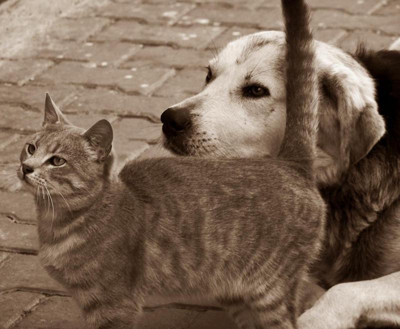 best friends forever by brokenleaves