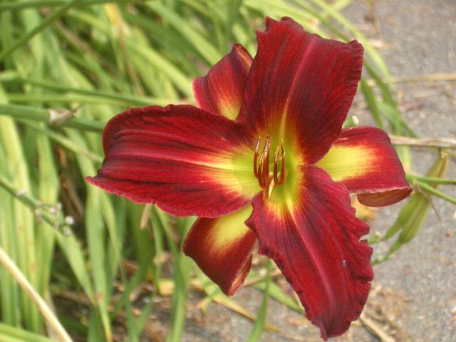 Flower_0003 by DRE-stock