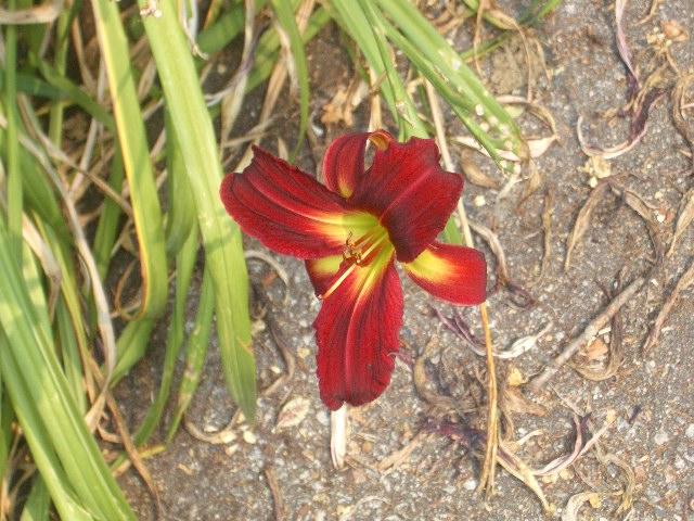 Flower_0005 by DRE-stock