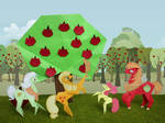 Great harvest at Sweet Apple Acres