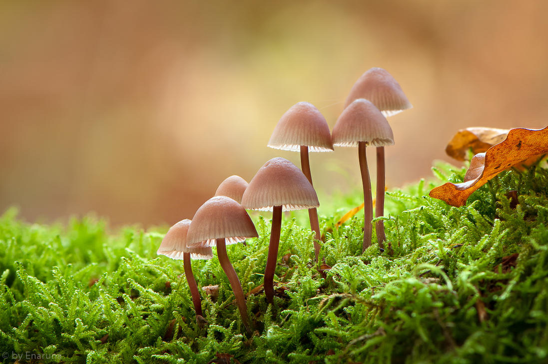 Little Mushrooms in the Moss by enaruna