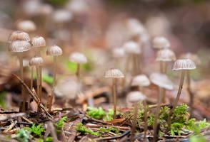 Little Mushrooms by enaruna