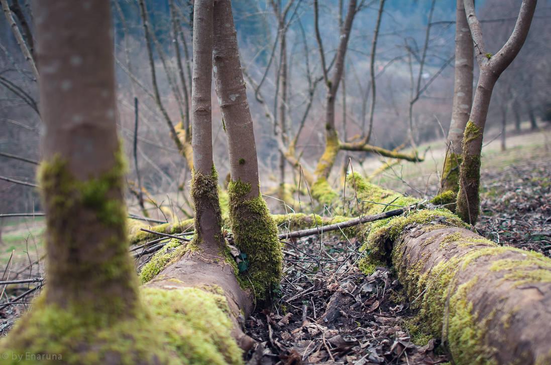 Lying Tree by enaruna
