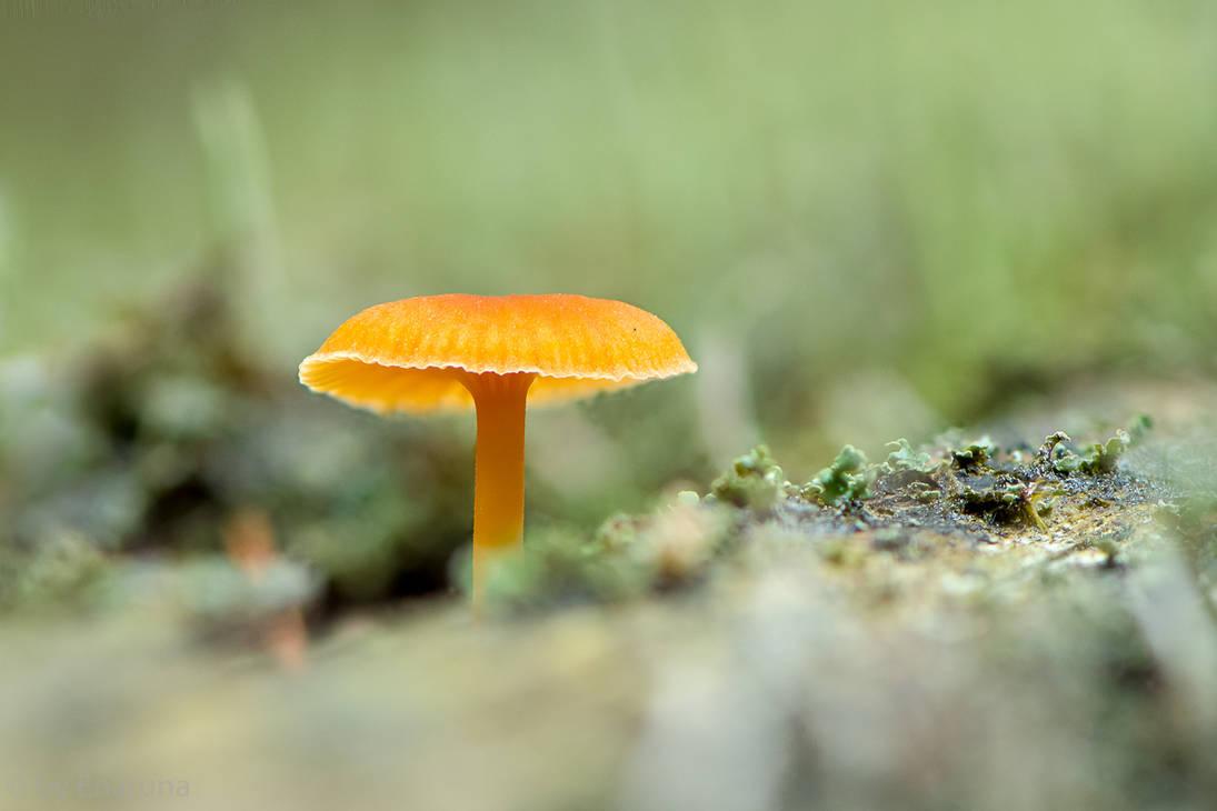 Little Mushroom by enaruna