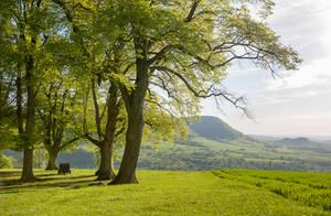 Lime Trees on the Swabian Alb