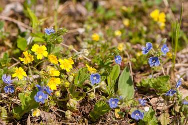 Little Flowers by enaruna