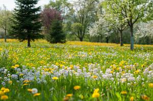 Spring on the Swabian Alb