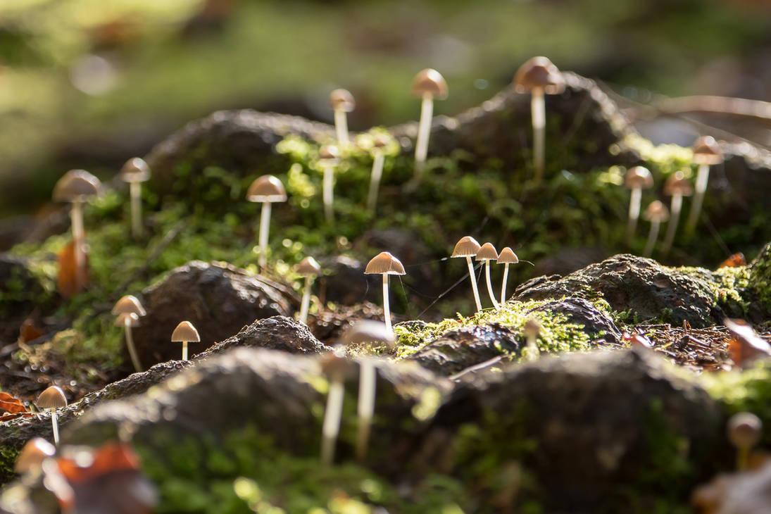 Dwarfs Garden by enaruna