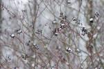 Birdseed in the Winter