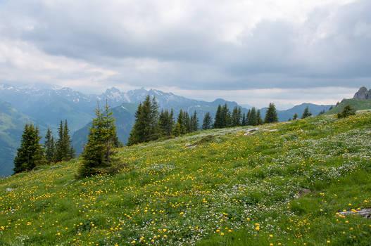 Flowering Alpine Meadow