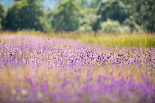 Flowering  Wet Meadow