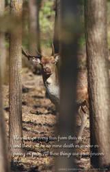 Deer II by unbelievablex