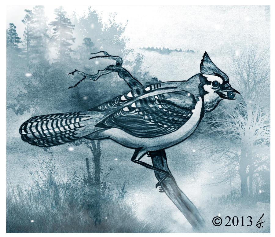 Blue Jay by ricky4