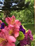 The Bouquet (2/3)