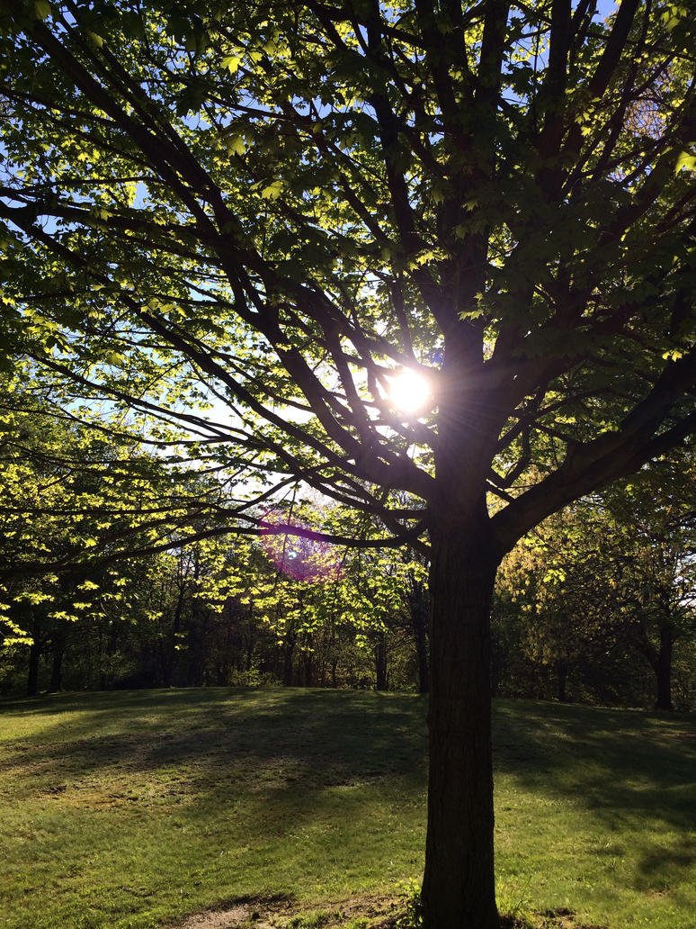 Sunny Branches by zer0anonymous