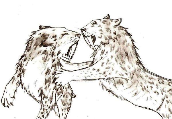 Smilodon Face By Pyroraptor42 On Deviantart: Tigre-a-dent-de-sabre Favourites By Radrod On DeviantArt
