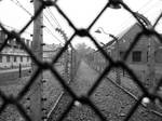 behind the fence..