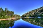 Lac Spruce