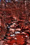 Blood Stream - HDR