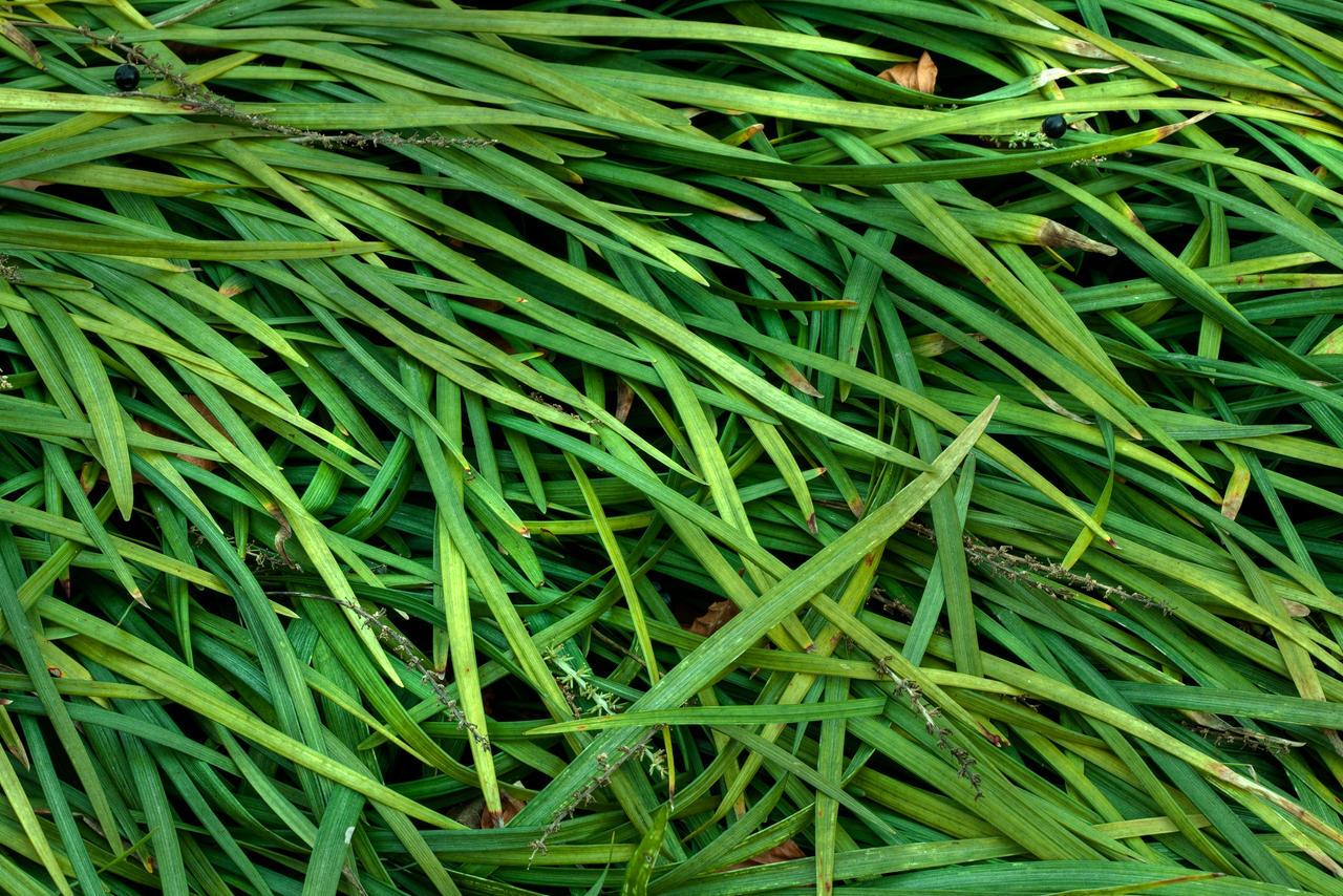 Plant Blades