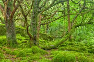 Emerald Forest - Killarney National Park