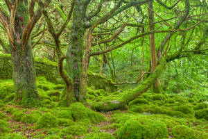 Emerald Forest - Killarney National Park by boldfrontiers
