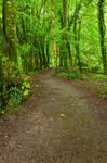 Killarney Forest Trail I