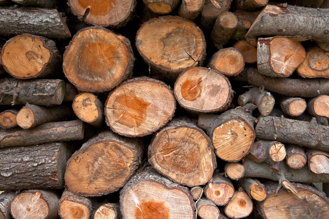 Wood Logs by boldfrontiers