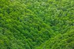 Green Foliage - HDR