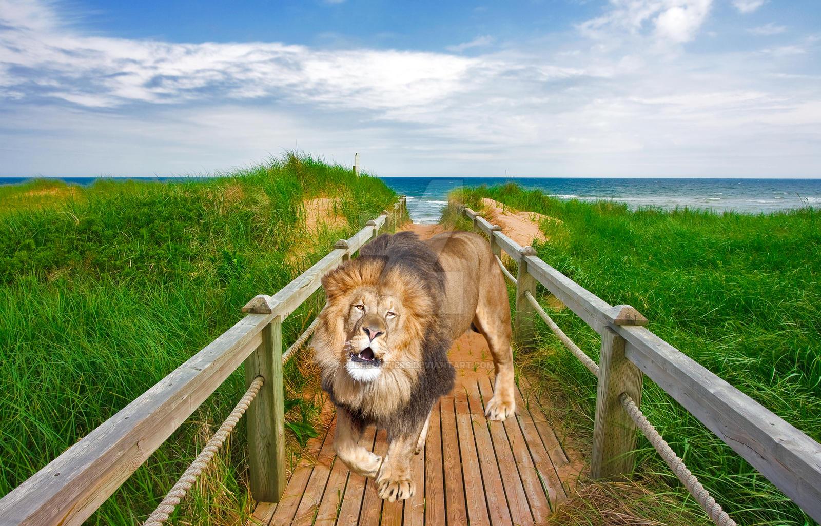 Beach Boardwalk Lion - Exclusive Premade Stock by somadjinn