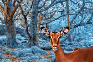 Impala Winterland by boldfrontiers