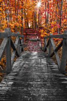 Bridge to Fall Colors by boldfrontiers