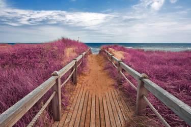 Pink Beach Boardwalk by boldfrontiers