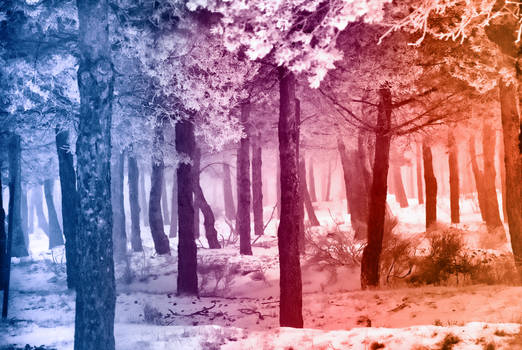 Smooth Rainbow Winter Forest - Special Dedication