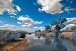 Kruger Park Blues