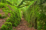 Ancient Emerald Forest Trail