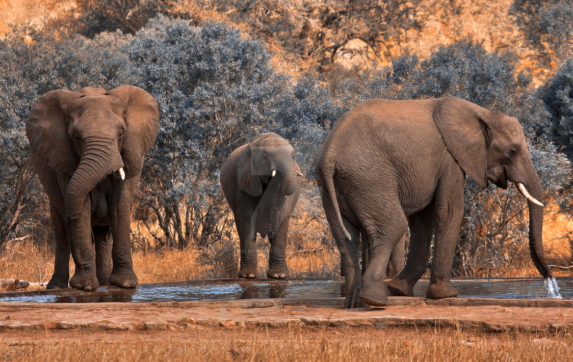 Kruger Park Elephants - Exclusive Stock by somadjinn