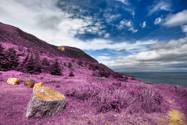 Ultra Violet Cape Breton by boldfrontiers